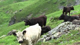 Download Hiking from Birg to Gimmelwald in Switzerland, July 2014 Video