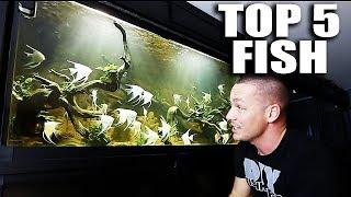 Download TOP 5 FISH IN MY AQUARIUMS Video