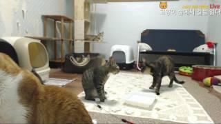 Download 고양이숲의 족발 특식타임!!! Video
