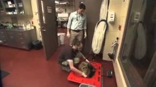 Download Great Job! Zoo Veterinarian Video