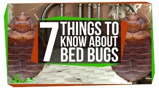 Download 7 Things You Should Know About Bed Bugs Video
