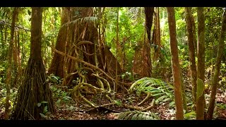 Download Amazon jungle documentary national geographic Video
