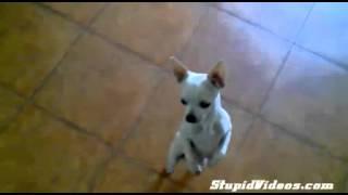 Download ghhjj Video