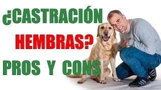 Download CASTRACIÓN HEMBRAS- Ventajas y Desventajas de VACIAR A TU PERRA Video