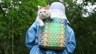 Download かご猫 x 背負籠猫160805 Pannier cat Video