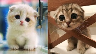 Download Baby Cats - Cute and Funny Cat Videos Compilation #8 | Aww Animals Video