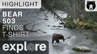 Download Bear 503 Finds T-Shirt - Brooks Falls - Live Cam Highlight Video