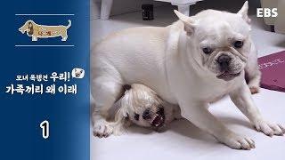Download 세상에 나쁜 개는 없다 - 모녀 폭행견 우리! 가족끼리 왜 이래 #001 Video