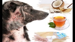 Download 10 Best Home Remedies for Hot Spots in Dogs (Without Vet Help) Video