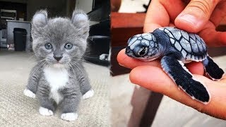 Download Cute Baby Animals Videos Compilation Cute Moment of The Animals - Cutest Animals #1 Video