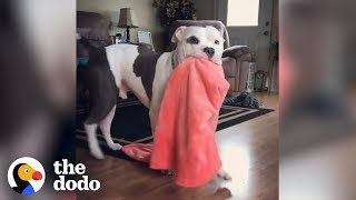 Download Dogs Who Grab Things When They're Excited | The Dodo Video