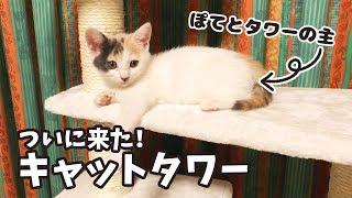 Download 子猫のぽてとにキャットタワーをプレゼント Video