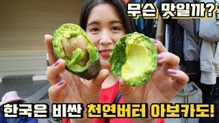 Download 한국은 비싼 천연버터 아보카도를 과일천국 베트남에서 샀더니... Video