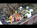 Download Bury Kitchen Scraps Directly in Garden and This Happens Video