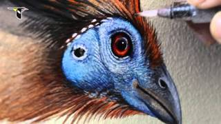 Download Reflecting Nature: Creating the Wall of Birds Video