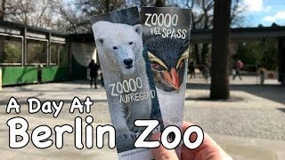 Download A Day At Berlin Zoo - March 2017 Video