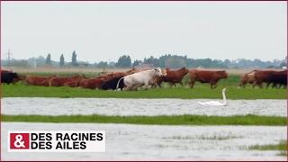 Download Loire sauvage : quand le fleuve sort de son lit Video