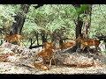 Download दिल्ली चिड़ियाघर का दीदार II Delhi Zoo II Chidiya Ghar II दिल्ली चिड़िया घर Video