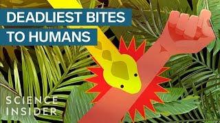 Download The Deadliest Venomous Animals In The World Video