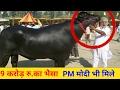 Download दुनिया का सबसे महंगा करोड़पति भैसा, जिससे मिले PM मोदी जी ! Most expensive buffalo yuvraj in Asia Video