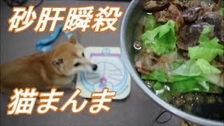 Download 柴犬小春 【一心不乱】砂肝+『猫まんま』!かつお節をトッピングしたるよってに! Video