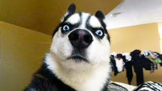 Download ANIMAUX DRÔLES nous fera RIRE extrêmement dur - Funny DOGS et CATS Compilation Video