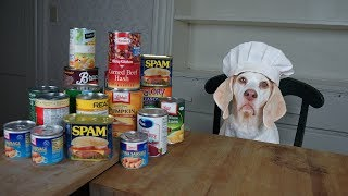 Download Chef Dog Makes Canned Food Casserole: Funny Dog Maymo Video