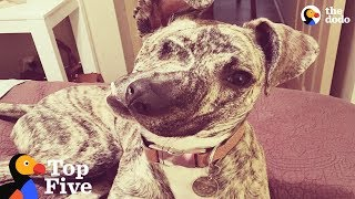 Download Special Dogs That Just Need Some Extra Love | The Dodo Top 5 Video