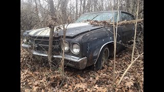 Download Animals Found Living In A $6-figure Rare 1970 L78 Chevelle Rescued From The Woods In Arkansas Video