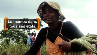 Download Cameroun : Le manioc dans tous ses états Video