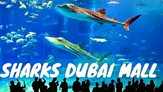 Download Sharks Dubai Aquarium Underwater Zoo Dubai Mall *HD* Video