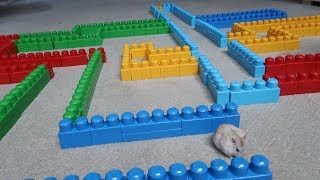 Download OBSTACLE COURSE MAZE FOR MY HAMSTER!! (INSANE) Video