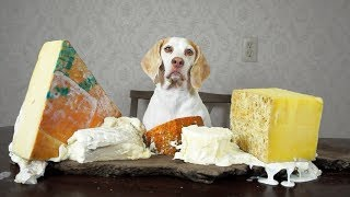 Download Dog Makes Cheese Platter: Funny Dog Maymo Video