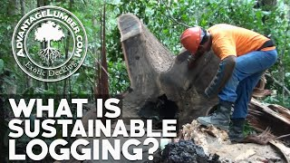 Download What is Sustainable Logging? The Benefits of Well-Managed Forestry to the Green Economy Video