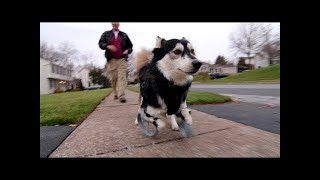 Download Derby the dog: Running on 3D Printed Prosthetics Video