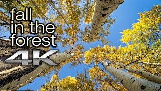 Download 2 HRS FALL LEAVES in 4K: ″Fall in the Forest″ Nature Relaxation™ Video Screensaver (+Nature Sounds) Video