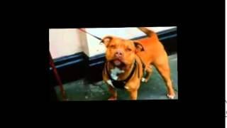 Download Newham Dog Warden Tina Delaney Video