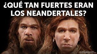 Download Quién ganaría: humano vs neandertal Video