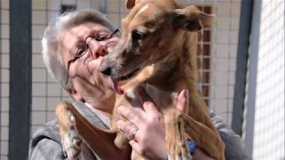Download Chiens à adopter Video