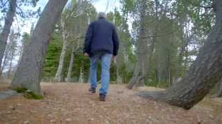 Download Are there trees in Iceland? | #AskGudmundur Video
