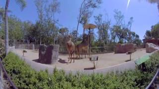 Download San Diego Zoo Exhibit Tour in 360 video Virtual Reality Video