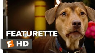 Download A Dog's Way Home Featurette - Shelby's Way Home (2019)   Movieclips Coming Soon Video