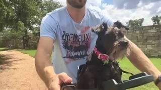 Download Buddyrider™ Dog Bicycle Seat Overview and Review - Top Tested Dog Bike Carrier Video