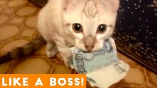 Download Like a Boss Ultimate Smart Animal Compilation | Funny Pet Videos! Video