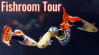 Download Cory from Aquarium Co-op Fish Room Tour | Fancy Goldfish, Guppy Fish, Bettas, Livebearers, Turtles, Video