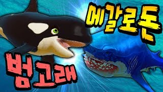 Download 범고래 vs 메갈로돈?! 한번 붙어보자 쫘식아! [ 피드앤그로우 피쉬 ( Feed and Grow Fish ) ] l 휴지 게임 Video