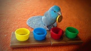 Download Funny Parrots 🐦😂 Cute Parrot Tricks (Part 2) [Funny Pets] Video