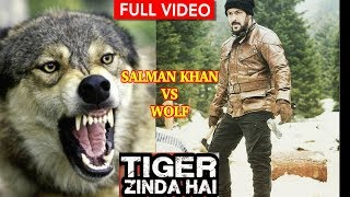 Download Salman Khan Fighting with a WOLF |wolves| Tiger Zinda hai new promo | katrina kaif | ali abbas zafar Video