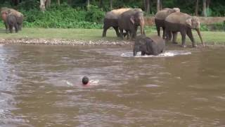 Download Elephant Come To Rescue People Video