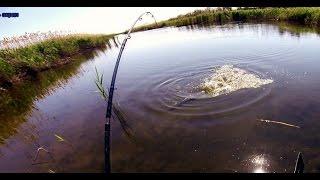 Download Ловля щуки. Разведка по щучьим местам. Ловля щуки в траве. Pike fishing Video